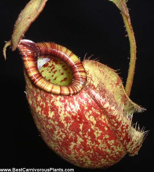 carnivorous plant photo finder autos post